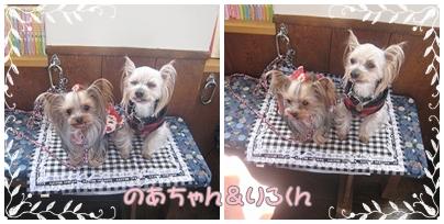 2cats_20120209145817.jpg