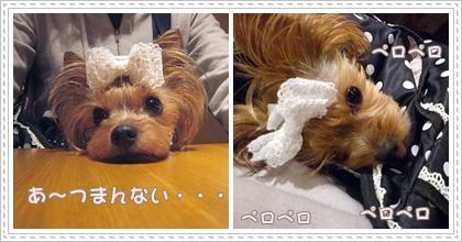 3cats_20120312112501.jpg