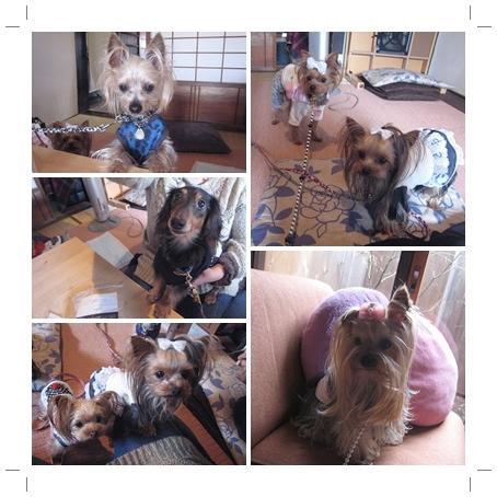 4cats_20120311184215.jpg