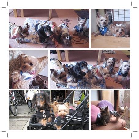 5cats_20120311184215.jpg