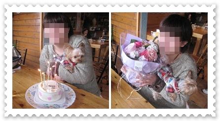 6cats_20120413125102.jpg