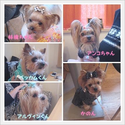 cats_20111209184646.jpg