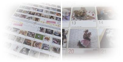 cats_20111216195000.jpg