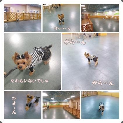 cats_20120130110441.jpg
