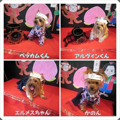 cats_20120305115812.jpg