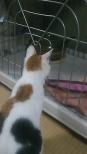 猫 outside キャットゲージ