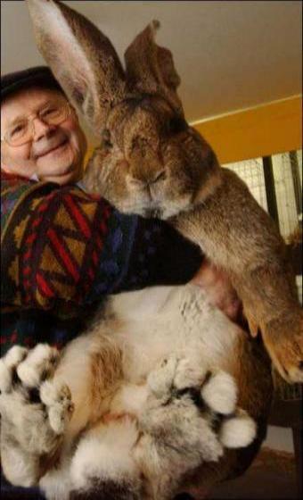 でかいウサギ
