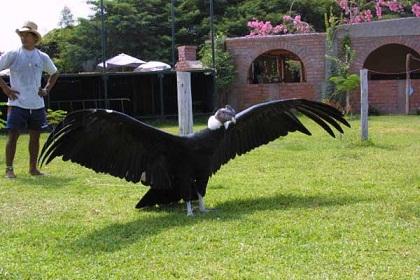 最大飛べる鳥