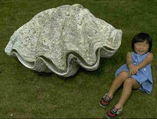 世界最大の二枚貝 オオシャコガイ