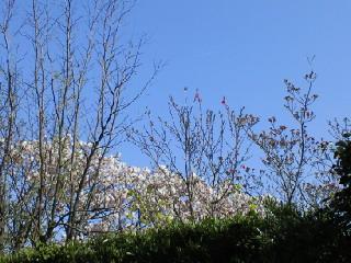 2010-04-13 19:51:42