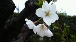 2011-04-09 09:09:18