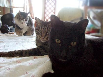 ちょびっと猫ザイル、、、(゜m゜*)