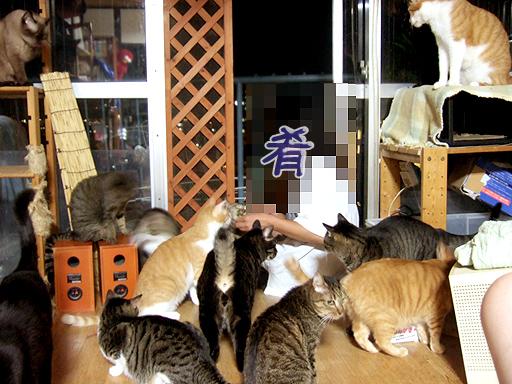 ここに来てない子には、旦那に猫草渡して食べてもらってます♪