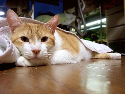 寒い時は、潜り込んで寝るのが好きなノル