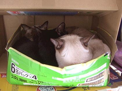 一昨日のブログでにぼちが入ってた猫ベッド