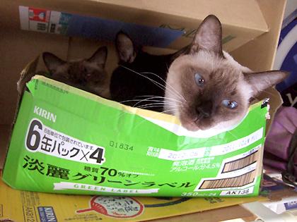 すでに壊れそうな勢いで、しなり過ぎている猫ベッド