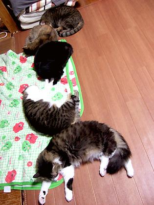 無駄に一列に並んで寝ているにゃんず