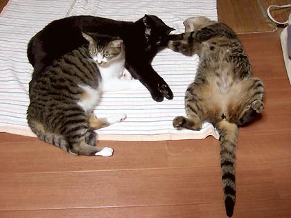 床暖の上で寝ている、蜜柑、バジル、なづな