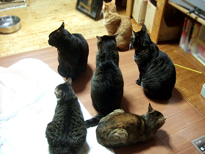 我が家の猫地蔵