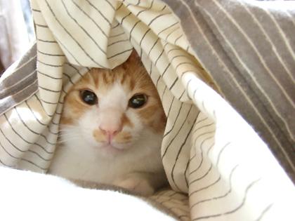 腕枕して寝てる時のお顔も撮って見せた~~い!!!!