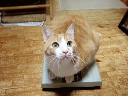1人で体重測定できるのはコニャだけ~