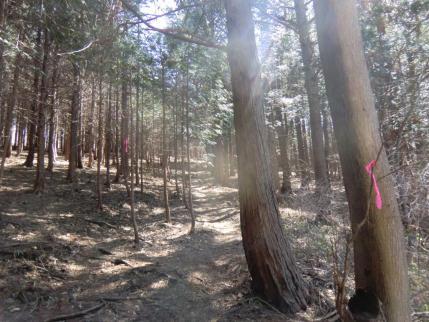 最初は植林帯