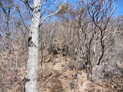 稜線への岩ゴロ帯