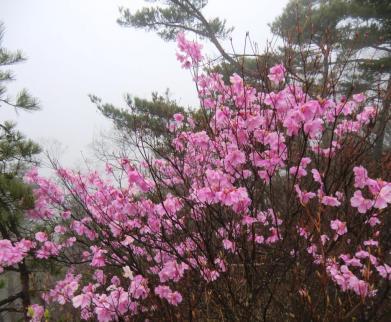 仙人ヶ岳への尾根道に咲く