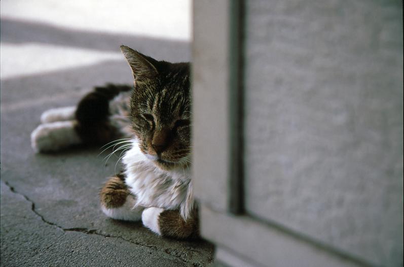 コピー ~ 浅野猫
