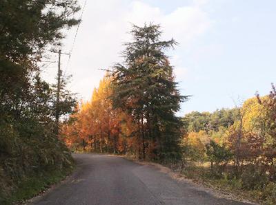 柿畑近くの道路(紅葉)