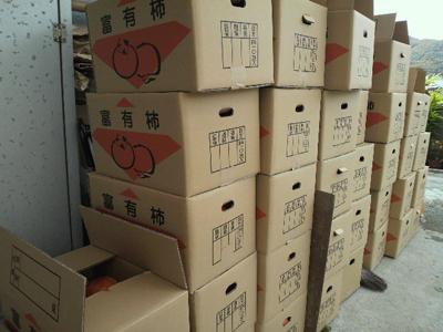 出荷待ちの富有柿