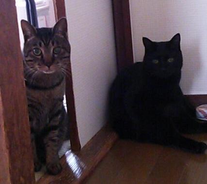 トラちゃん&クロちゃん