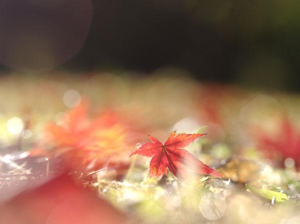 落葉のきらめき
