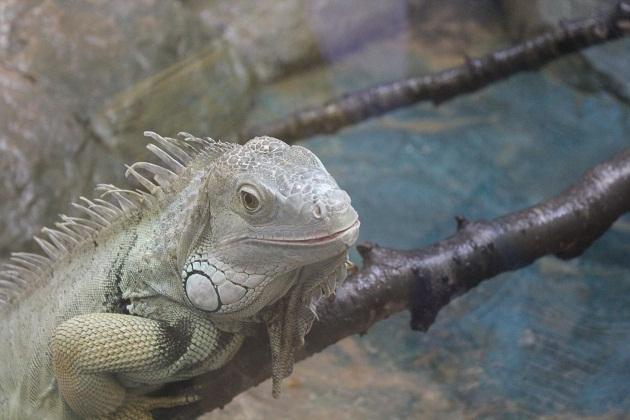 20111217 福山市立動物園_002