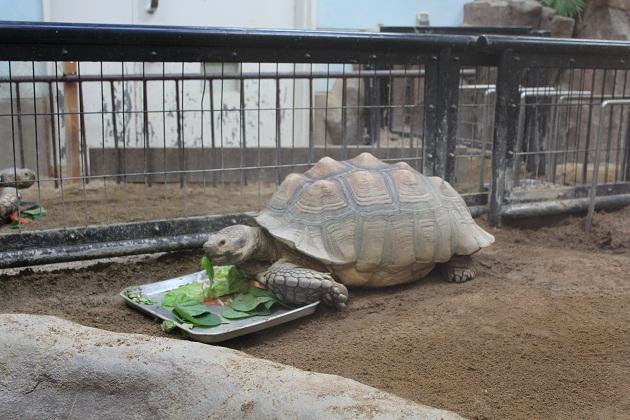 20111217 福山市立動物園_003