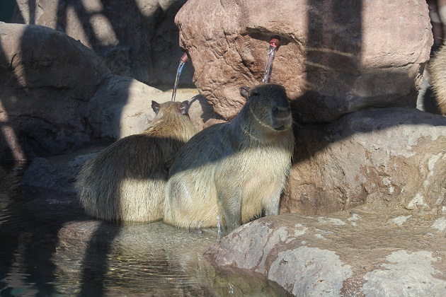 20111217 福山市立動物園_004