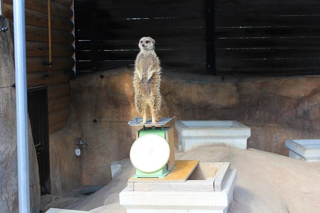 20111217 福山市立動物園_010