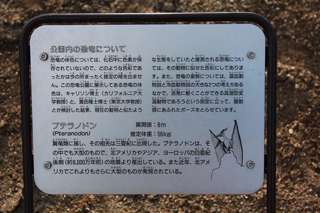 20120109 カブトガニ博物館_008