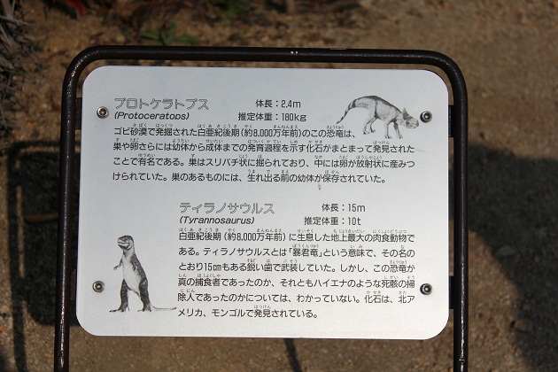 20120109 カブトガニ博物館_009