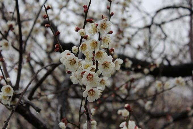 20120318 満汐梅林 花見祭り_001