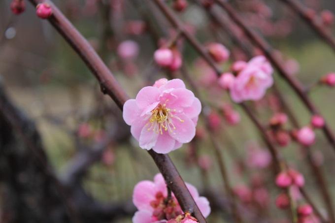 20120318 満汐梅林 花見祭り_004