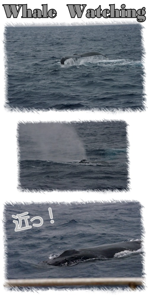 初クジラウォッチング!