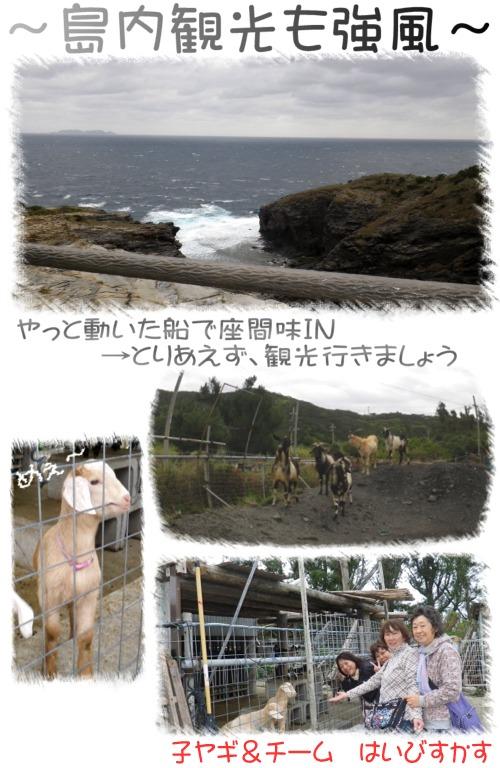 島内観光も強風