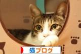 可愛い猫ブログが一杯♪