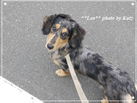 20110922 Leo (3)