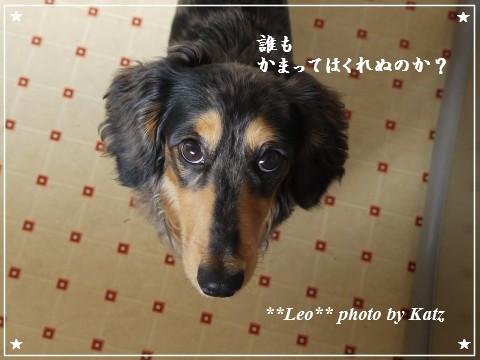 20110923 Leo (1)