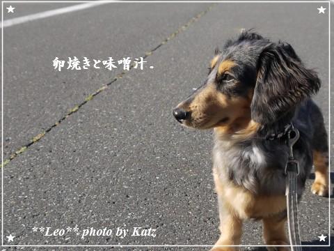 20110925 Leo (5)