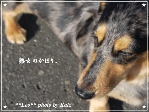 20110925 Leo (4)