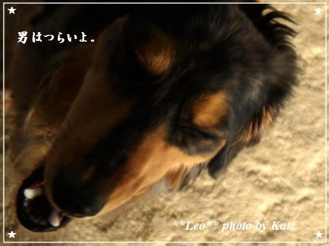 20110925 Leo(朝噛み) (3)