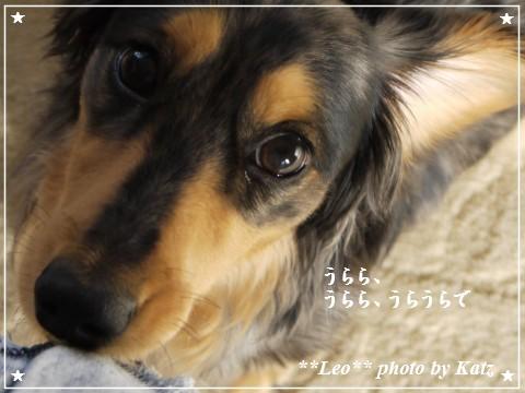 20110925 Leo (8)